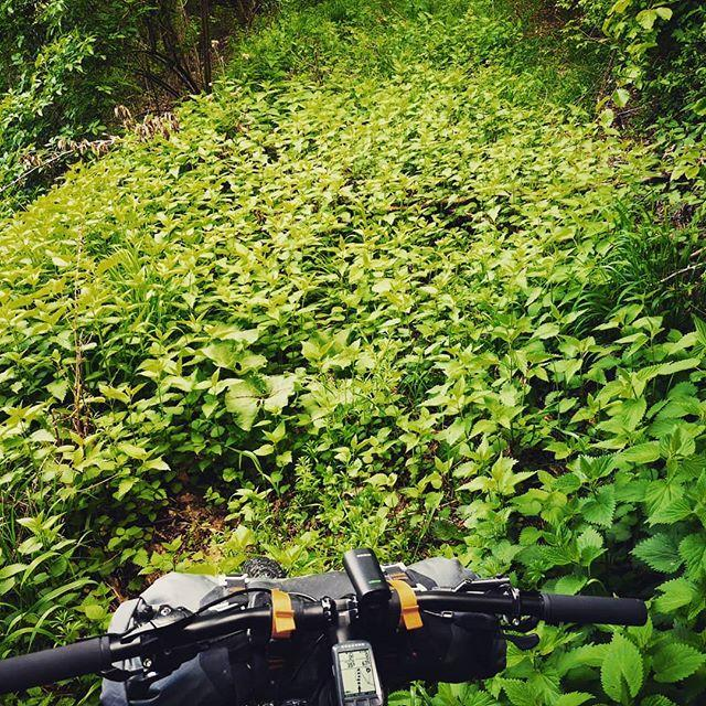 When Komoot sends you to bathe your legs in a sea of nettles.  #bikepacking #komoot #openstreetmap