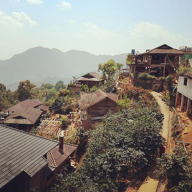 Up on the coffee mountains between Thailand and Myanmar today.