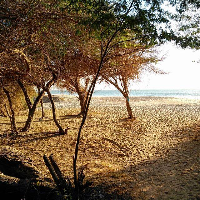 Sénégal has some of the prettiest beaches that #hackerbeach has seen so far. (And still time to book a flight to Dakar and join us on the way down to Banjul in the Gambia.)